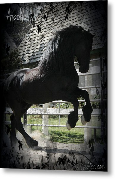 Friesian Stallion Metal Print