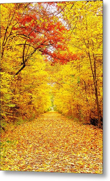 Golden Trail Metal Print by Andrea Dale
