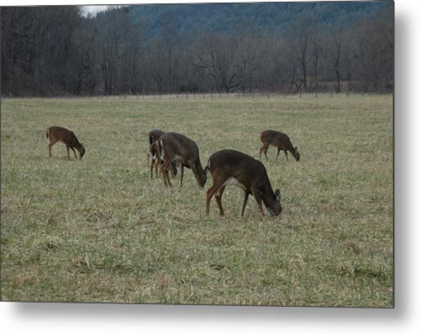 Grazing Metal Print by Les Scarborough