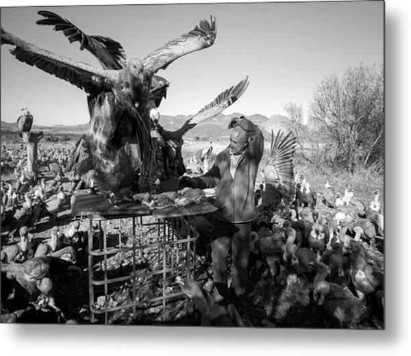 Griffon Vulture Conservation Metal Print