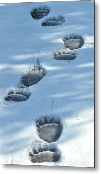 Grizzly Bear Tracks Metal Print