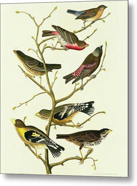 Group Of Birds Metal Print