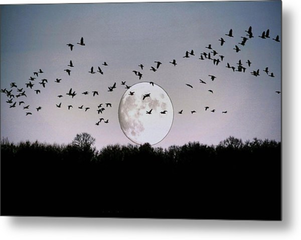 Guided By The Moon Metal Print