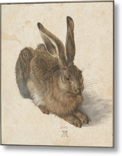 Young Hare Metal Print