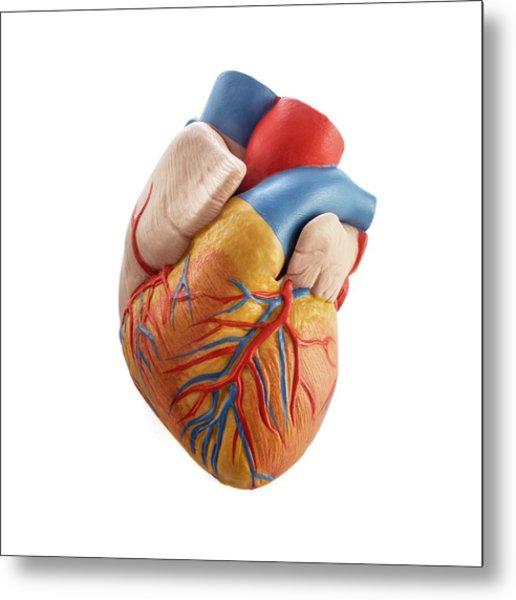 Heart Anatomy Model Metal Print