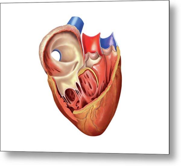 Anatomical Heart Art | Fine Art America