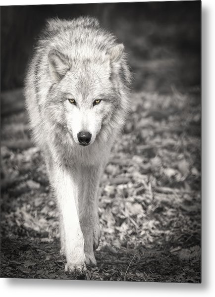 Here's Looking At You Metal Print