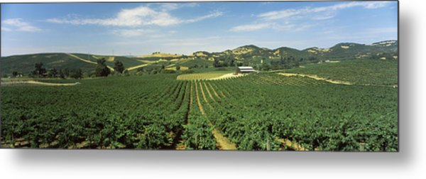 High Angle View Of A Vineyard, Carneros Metal Print