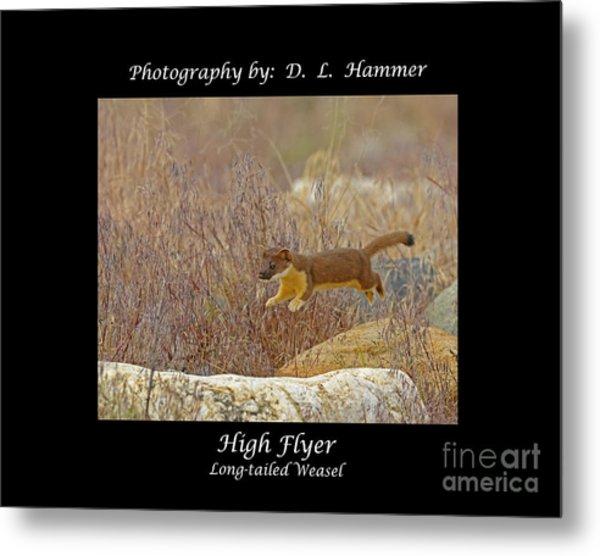 High Flyer Metal Print by Dennis Hammer