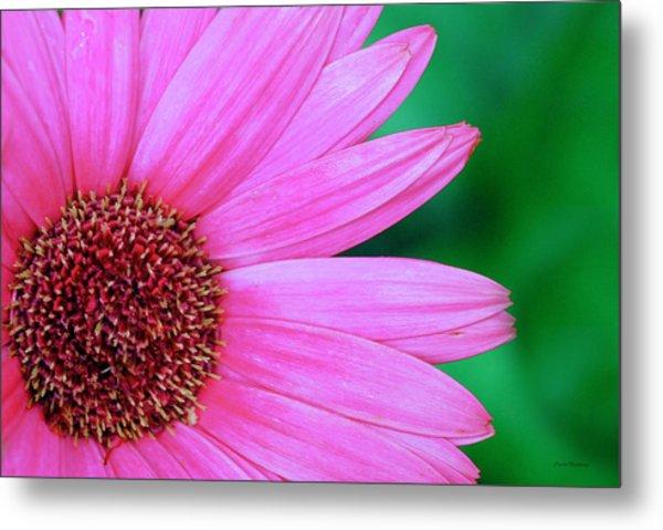 Pink Gerbera Flower Metal Print