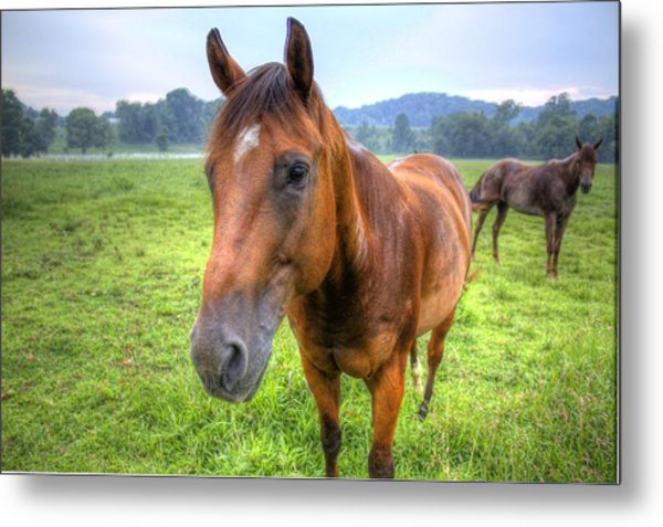 Horses In A Field Metal Print