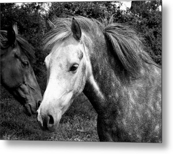 Horses Metal Print by Thomas Leon