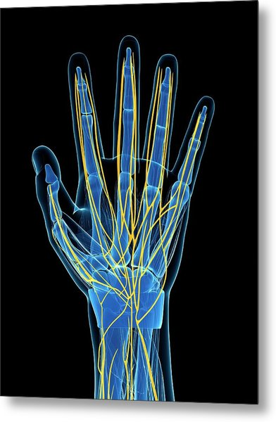 Human Hand Nerves Metal Print by Sebastian Kaulitzki