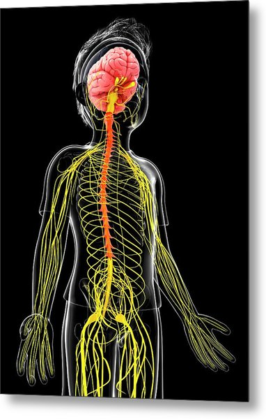 Human Nervous System Metal Print