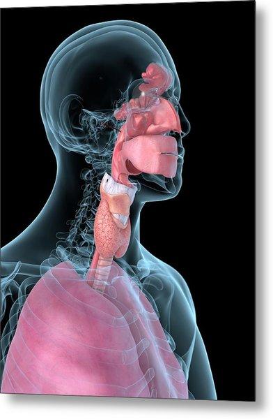Human Throat Metal Print by Sciepro