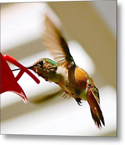 #hummingbird #bird #nature Metal Print