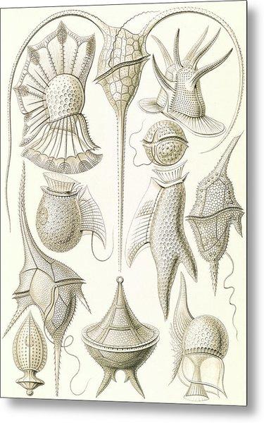Illustration Shows Microorganisms. Peridinea Metal Print by Artokoloro