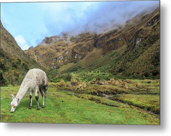 Inca Trail To Machu Picchu Metal Print