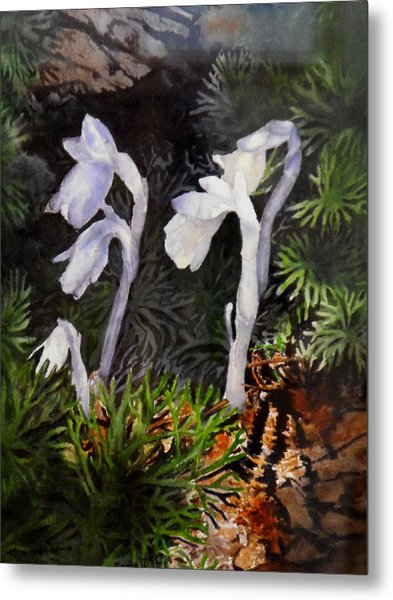 Indian Pipes Metal Print by Enola McClincey