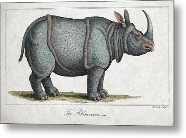 Indian Rhinoceros Metal Print