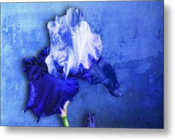 Metal Print featuring the photograph Iris Number Five by Bob Coates