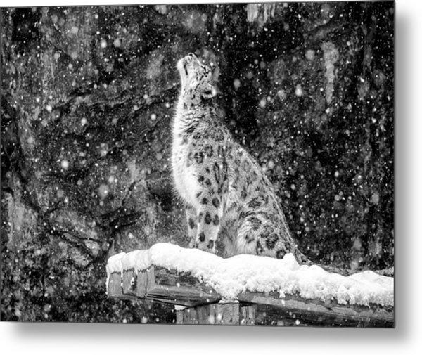 It's Snowing Metal Print by David Williams