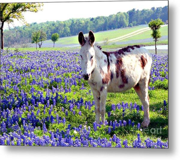 Jesus Donkey In Bluebonnets Metal Print