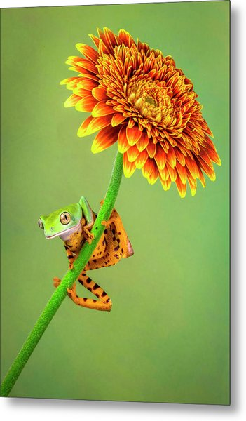 Just Hanging Around Metal Print by Renee Doyle