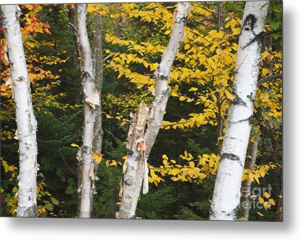 Kancamagus Highway - White Mountains New Hampshire Metal Print