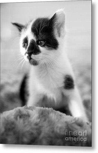 Kitten Dreaming Metal Print
