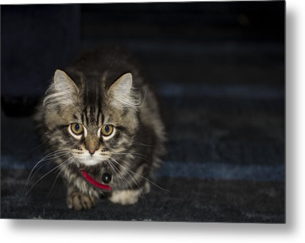 Kitty Metal Print by Sanjeewa Marasinghe