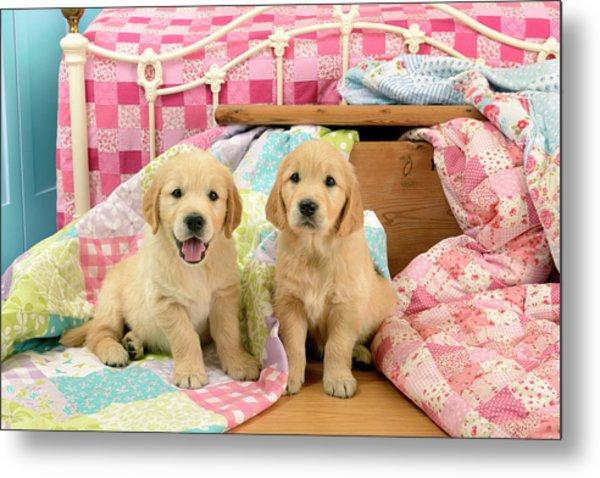 Labrador Puppies Pink Bed Metal Print