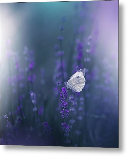 Lavender Queen... Metal Print by Juliana Nan