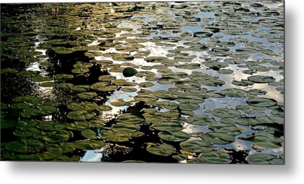 Lilly Pad Abstraction Metal Print