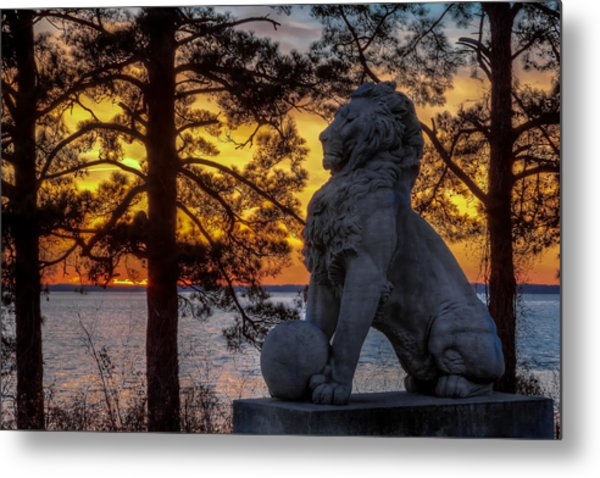 Lion At Sunset Metal Print