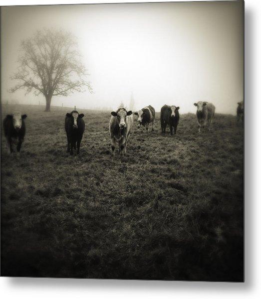 Livestock Metal Print