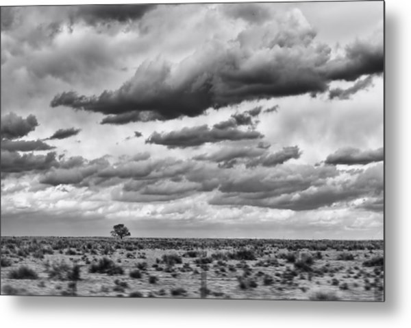 Lonesome Tree Bw Metal Print by Alan Tonnesen