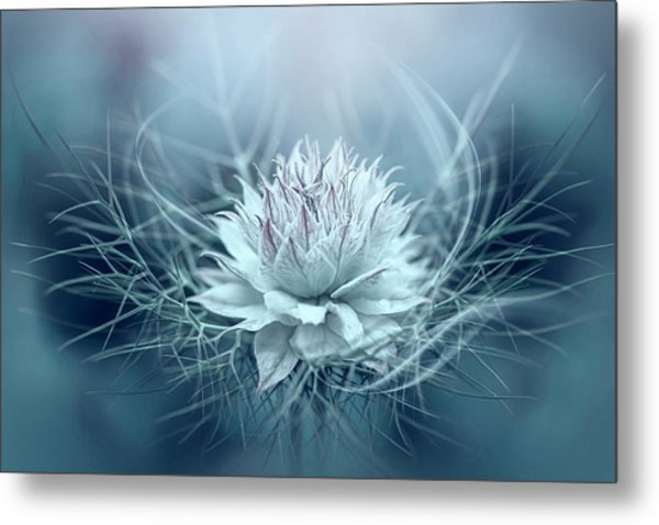 Love-in-a-mist Metal Print by Jacky Parker