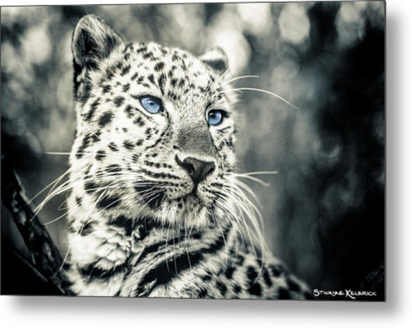Love Panther Metal Print