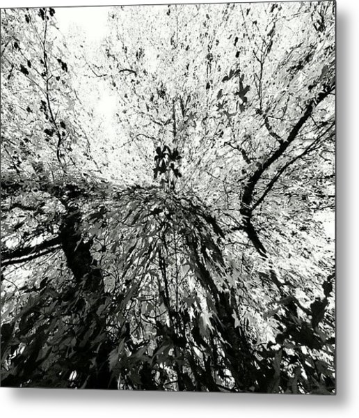 Maple Tree Inkblot Metal Print