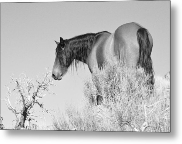 Mare Up High Metal Print
