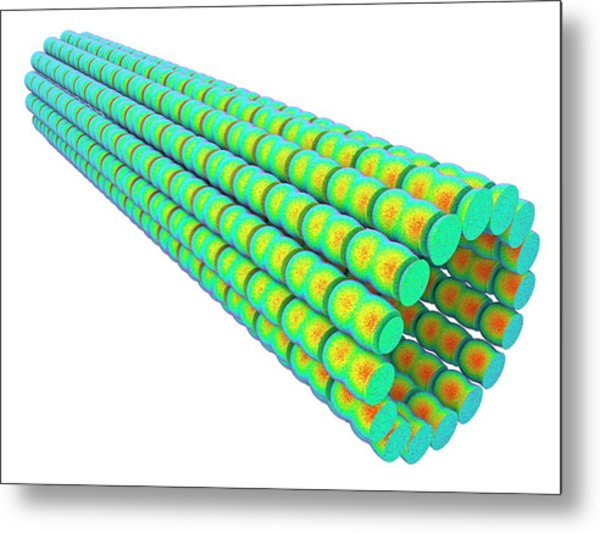 Microtubules Metal Print by Alfred Pasieka/science Photo Library