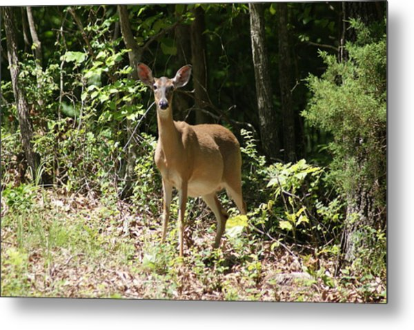 Momma Deer Metal Print