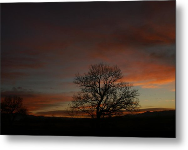 Morning Sky In Bosque Metal Print