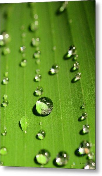 Water Drop On Green Leaf Metal Print
