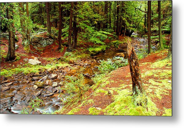 Mountain Stream With Hemlock Tree Stump Metal Print