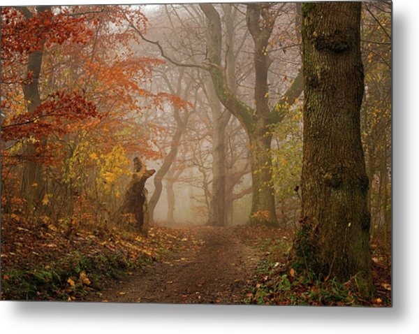 My Autumn Walk Metal Print