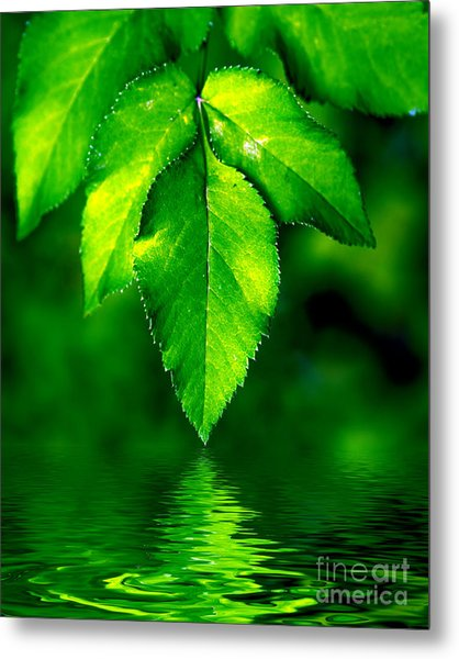 Natural Leaves Background Metal Print