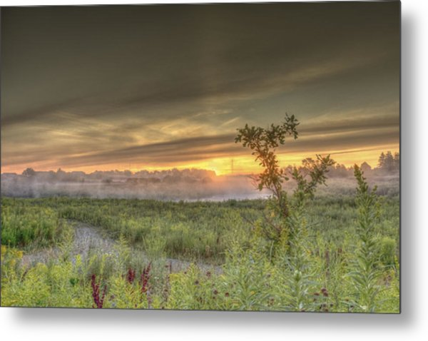 Nature In The Morning Metal Print