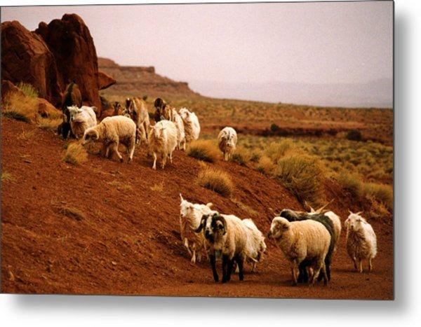 Navajo Sheep Metal Print